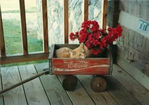 1992 - Darlene's porch wagan - Marmalade